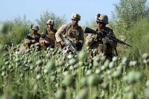 us-marines-opium-field