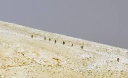 Ancient Palmyra Liberated Photo Gallery (17)