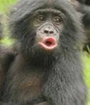 apes-6b