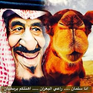 saudi-camel