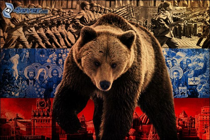 brown-russian-bear-7