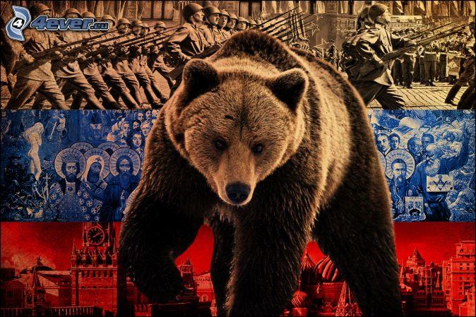 brown-russian-bear-7